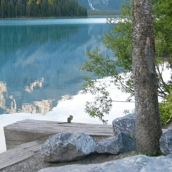 Sabbatical Kanada Wildlife am Lake Louise
