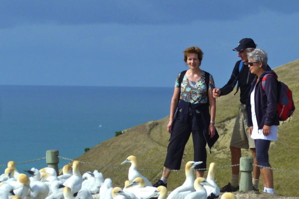 Edu-Seasons 50+ Sprachreise Neuseeland Ausflüge