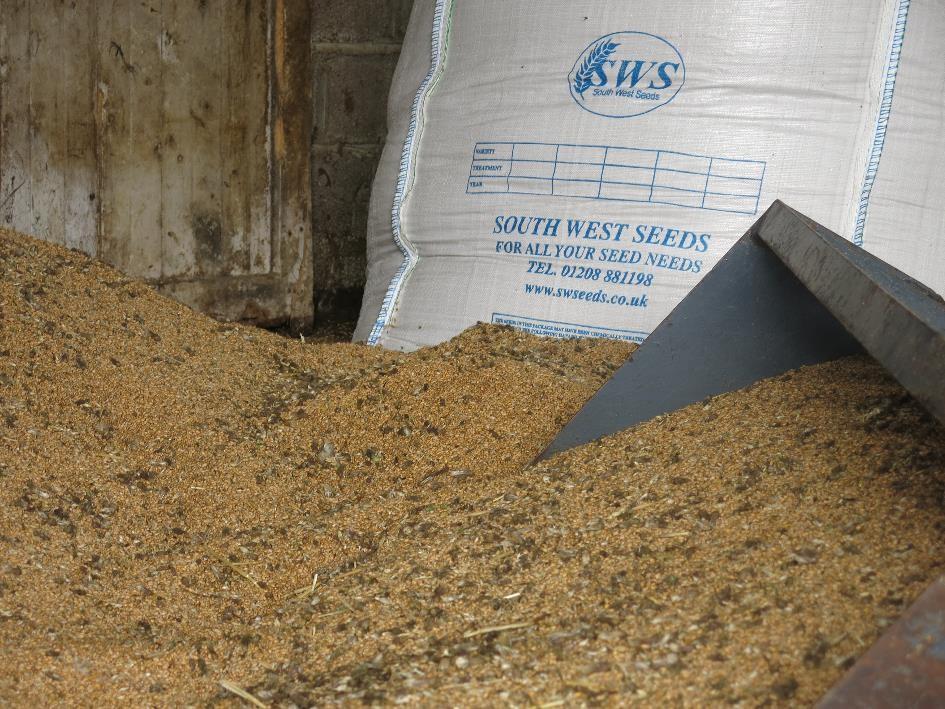 Lokales Getreide Transition Town Totnes Initiative